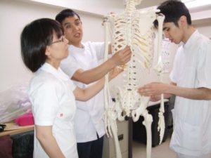 骨模型にて勉強中
